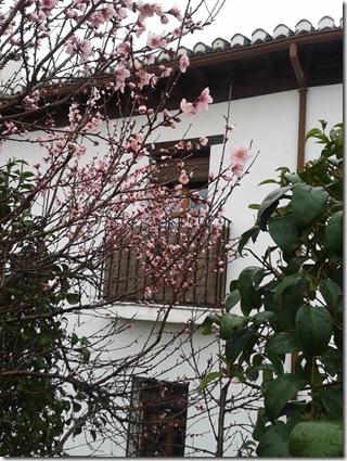 Granada Blüten